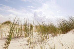 Yogaweekend Texel door Marianne van Lobberegt en Muriel van Dijk @ Sukha Texel | Oudeschild | Noord-Holland | Netherlands
